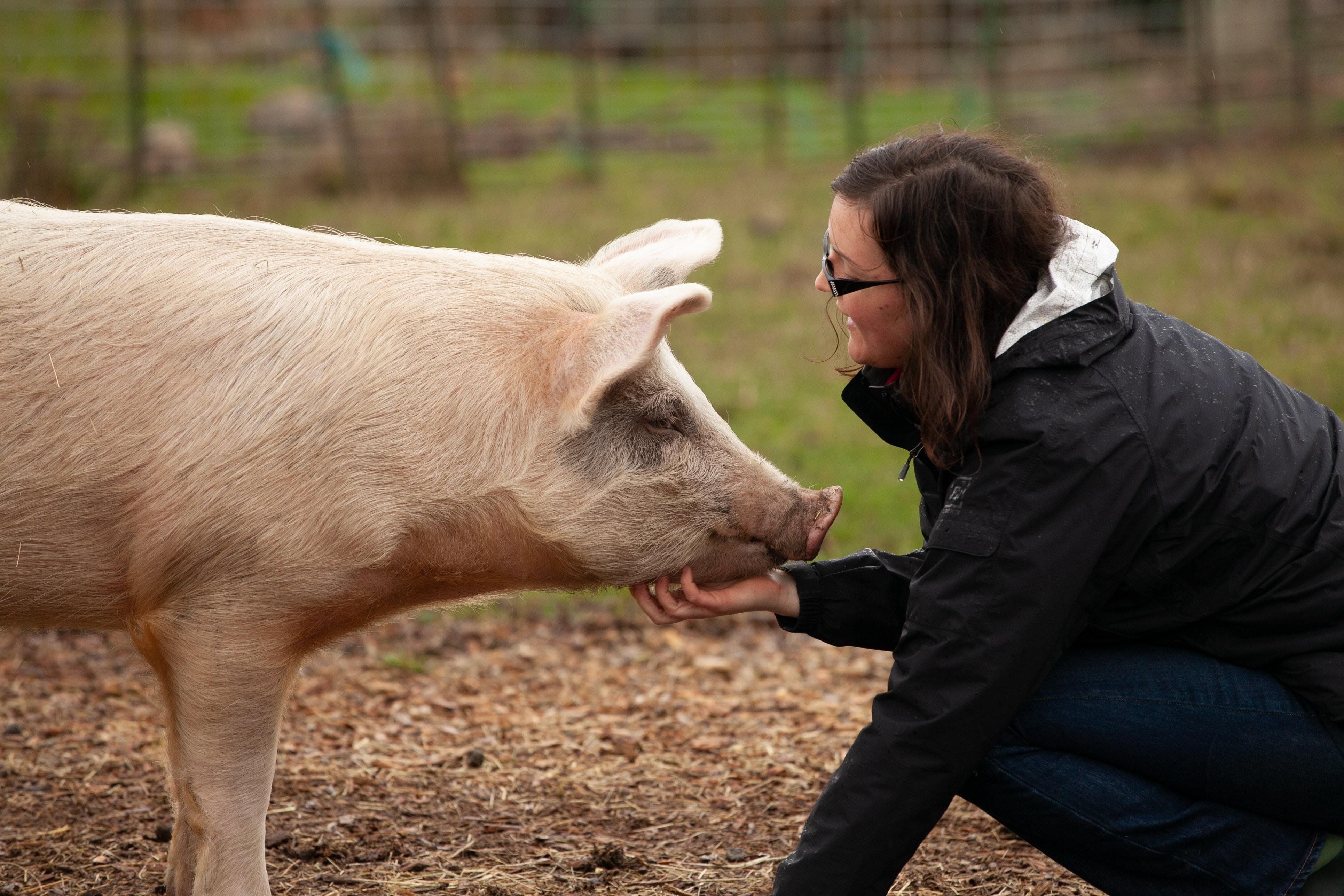 cochon et femme